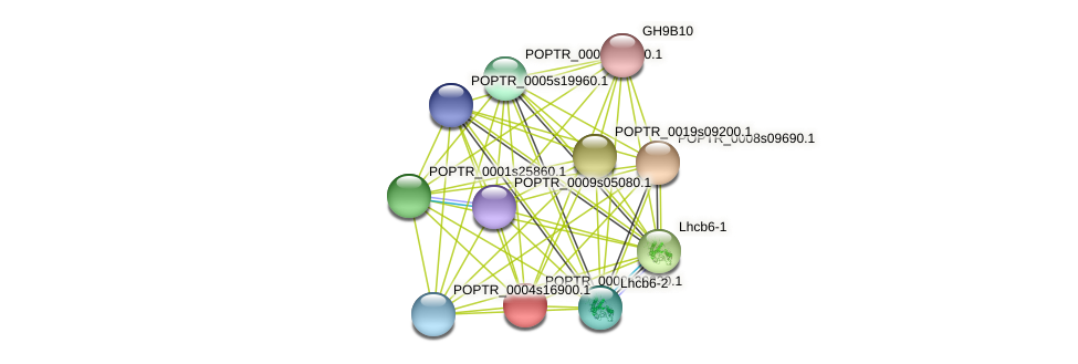POPTR_0002s20830.1 protein (Populus trichocarpa) - STRING interaction network