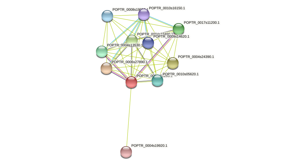POPTR_0002s21280.1 protein (Populus trichocarpa) - STRING interaction network