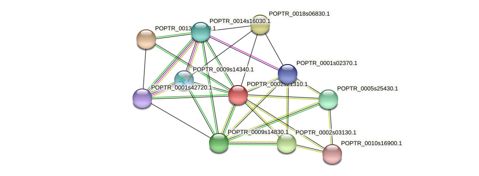 POPTR_0002s21310.1 protein (Populus trichocarpa) - STRING interaction network