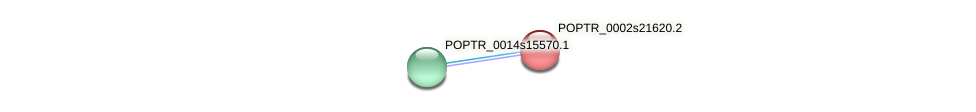 POPTR_0002s21620.1 protein (Populus trichocarpa) - STRING interaction network