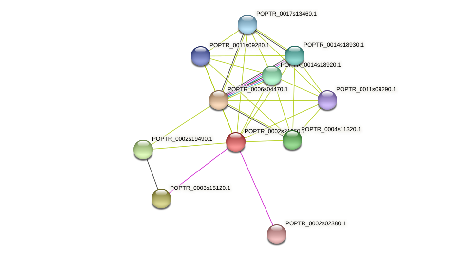 POPTR_0002s21660.1 protein (Populus trichocarpa) - STRING interaction network