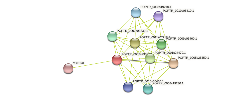 POPTR_0002s23080.1 protein (Populus trichocarpa) - STRING interaction network