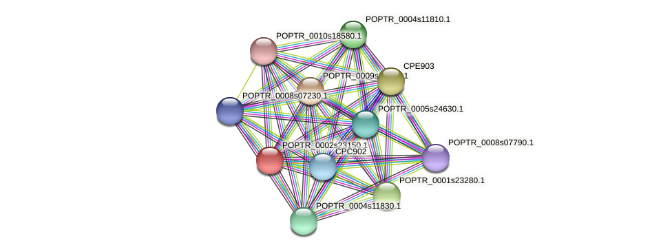 POPTR_0002s23150.1 protein (Populus trichocarpa) - STRING interaction network