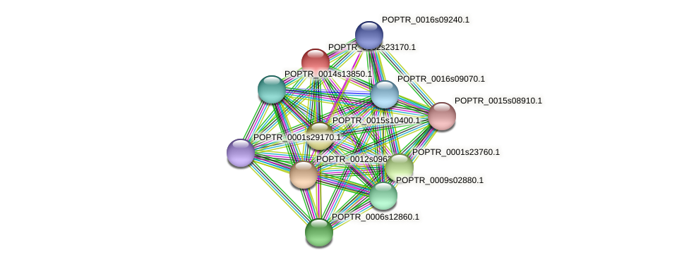 POPTR_0002s23170.1 protein (Populus trichocarpa) - STRING interaction network