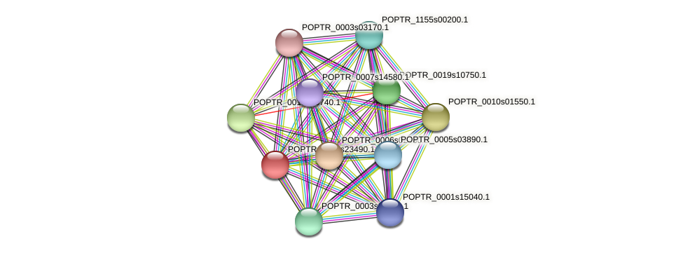 POPTR_0002s23490.1 protein (Populus trichocarpa) - STRING interaction network