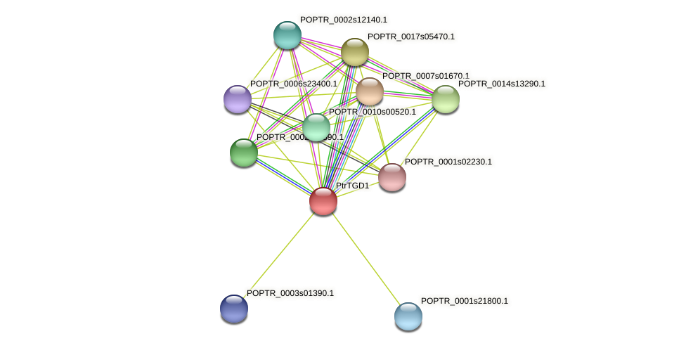 POPTR_0002s23540.1 protein (Populus trichocarpa) - STRING interaction network