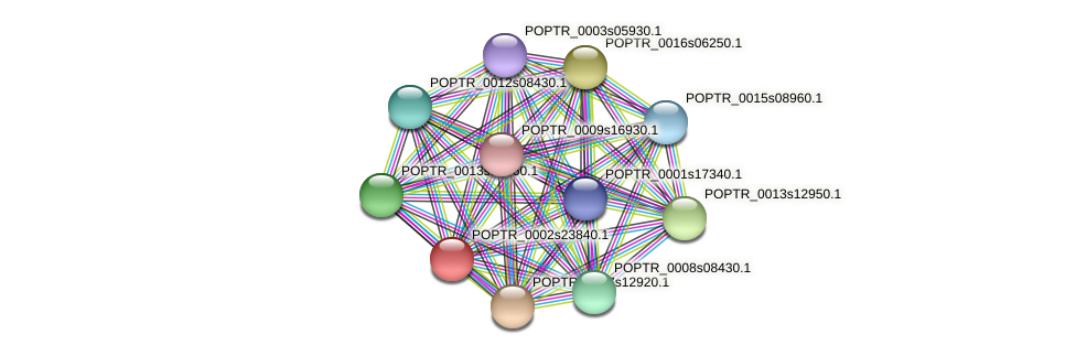 POPTR_0002s23840.1 protein (Populus trichocarpa) - STRING interaction network