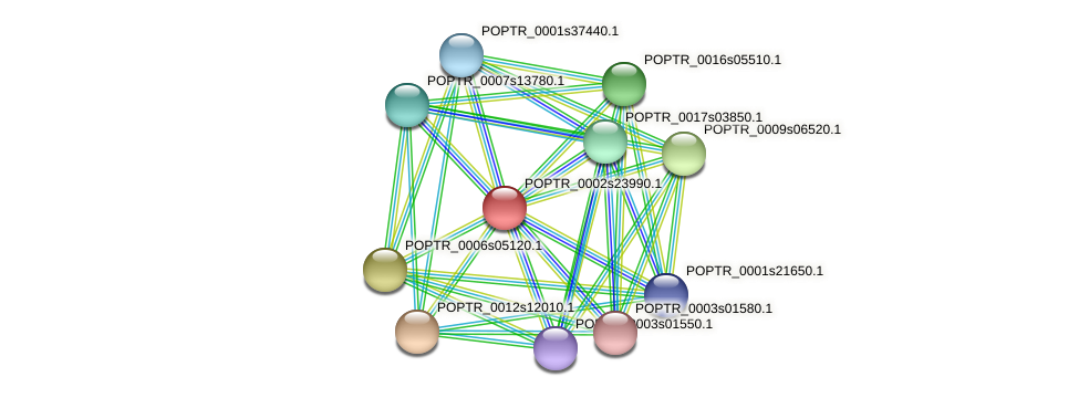 POPTR_0002s23990.1 protein (Populus trichocarpa) - STRING interaction network