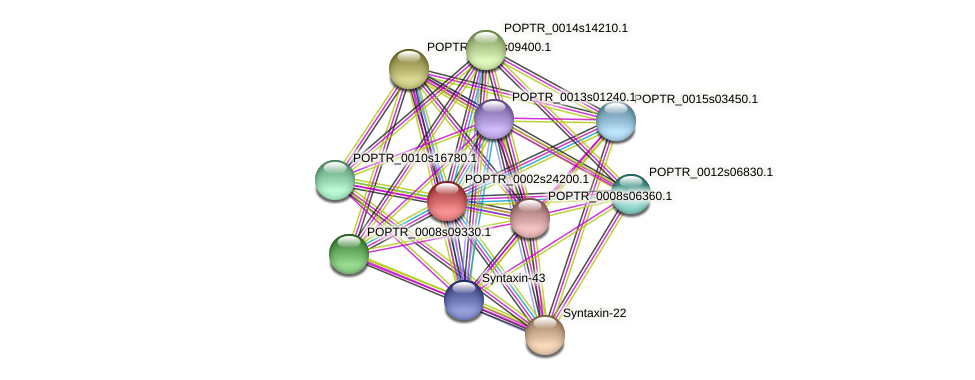 POPTR_0002s24200.1 protein (Populus trichocarpa) - STRING interaction network