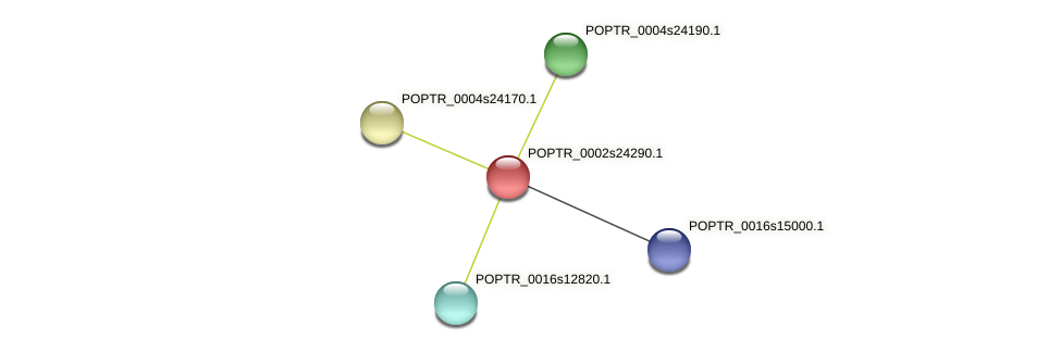 POPTR_0002s24290.1 protein (Populus trichocarpa) - STRING interaction network