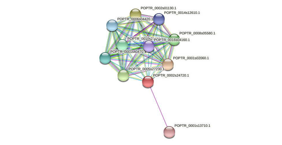 POPTR_0002s24720.1 protein (Populus trichocarpa) - STRING interaction network