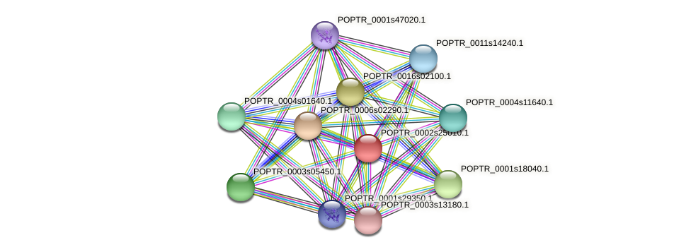 POPTR_0002s25010.1 protein (Populus trichocarpa) - STRING interaction network