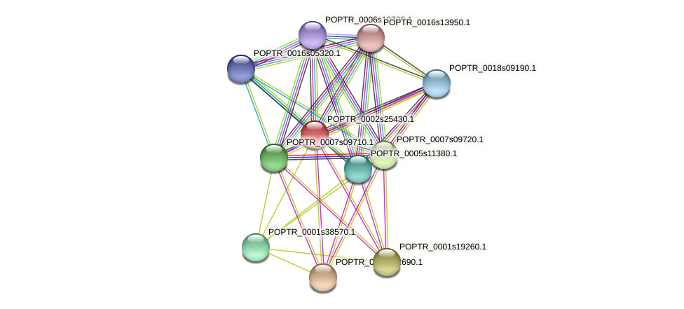 POPTR_0002s25430.1 protein (Populus trichocarpa) - STRING interaction network