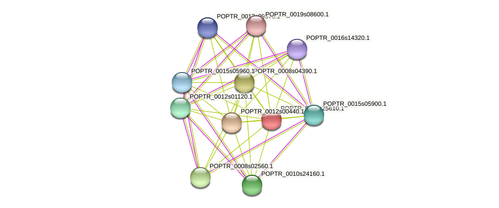 POPTR_0002s25610.1 protein (Populus trichocarpa) - STRING interaction network