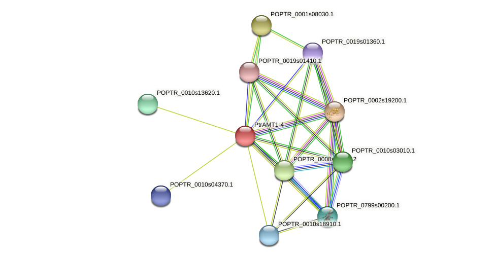 POPTR_0002s25640.1 protein (Populus trichocarpa) - STRING interaction network