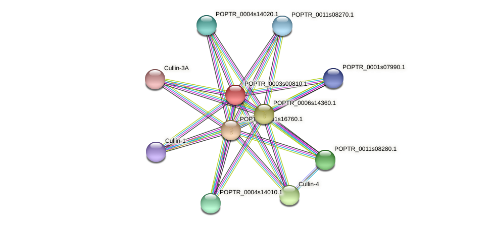 POPTR_0003s00810.1 protein (Populus trichocarpa) - STRING interaction network