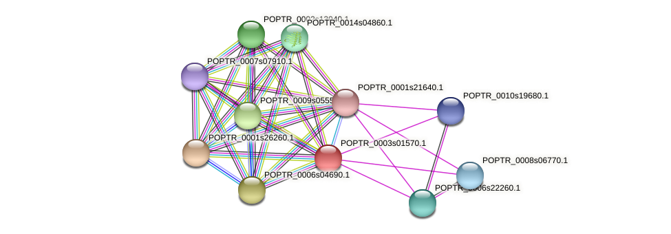 POPTR_0003s01570.1 protein (Populus trichocarpa) - STRING interaction network