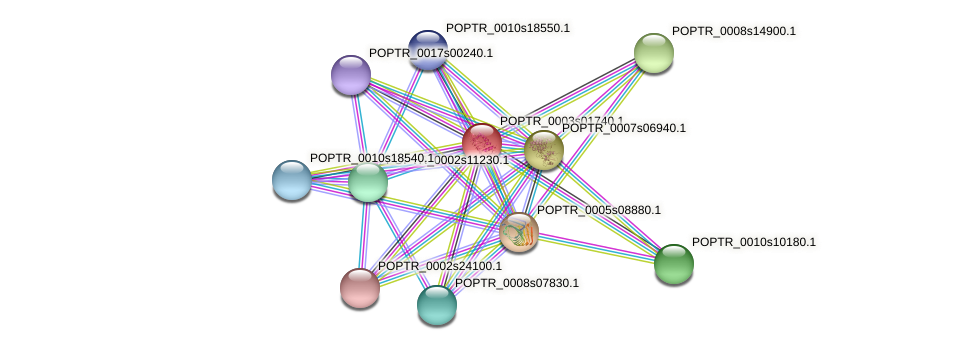 POPTR_0003s01740.1 protein (Populus trichocarpa) - STRING interaction network