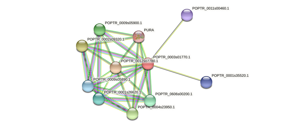 POPTR_0003s01770.1 protein (Populus trichocarpa) - STRING interaction network