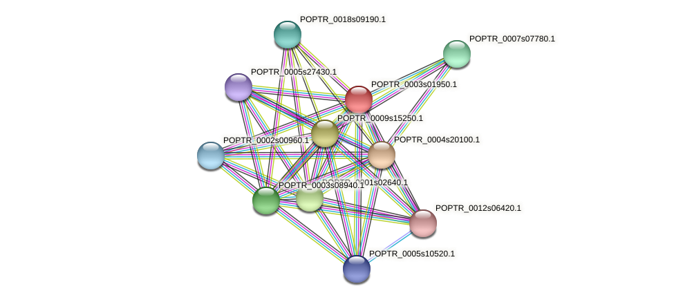 POPTR_0003s01950.1 protein (Populus trichocarpa) - STRING interaction network