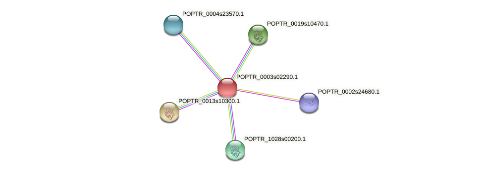 POPTR_0003s02290.1 protein (Populus trichocarpa) - STRING interaction network