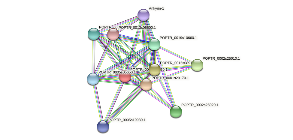 POPTR_0003s05450.1 protein (Populus trichocarpa) - STRING interaction network