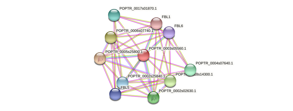 POPTR_0003s05560.1 protein (Populus trichocarpa) - STRING interaction network