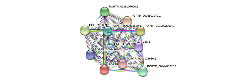POPTR_0003s05620.1 protein (Populus trichocarpa) - STRING interaction network