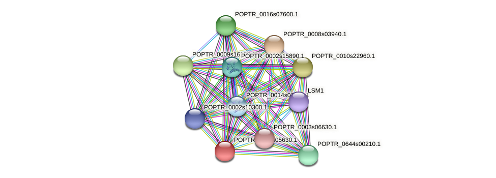 POPTR_0003s05630.1 protein (Populus trichocarpa) - STRING interaction network