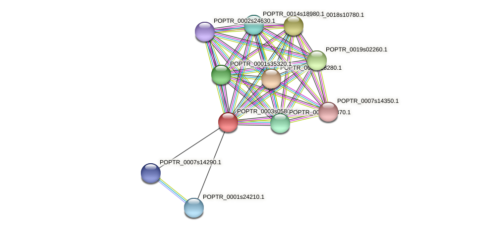 POPTR_0003s05800.1 protein (Populus trichocarpa) - STRING interaction network
