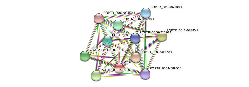 POPTR_0003s05940.1 protein (Populus trichocarpa) - STRING interaction network
