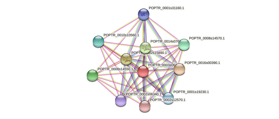 POPTR_0003s06130.1 protein (Populus trichocarpa) - STRING interaction network