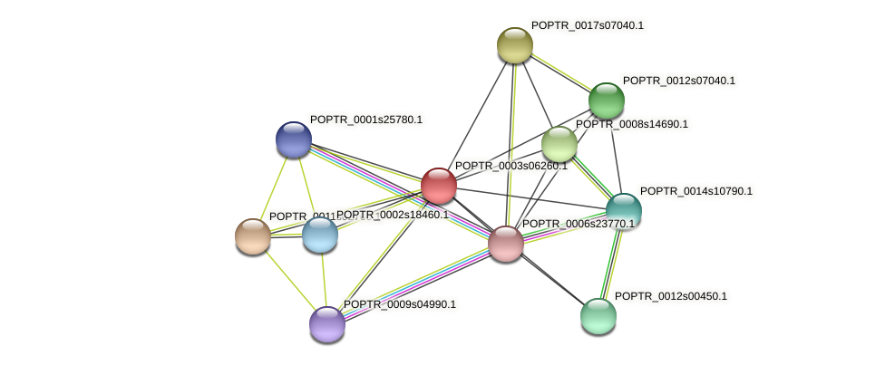 POPTR_0003s06260.1 protein (Populus trichocarpa) - STRING interaction network