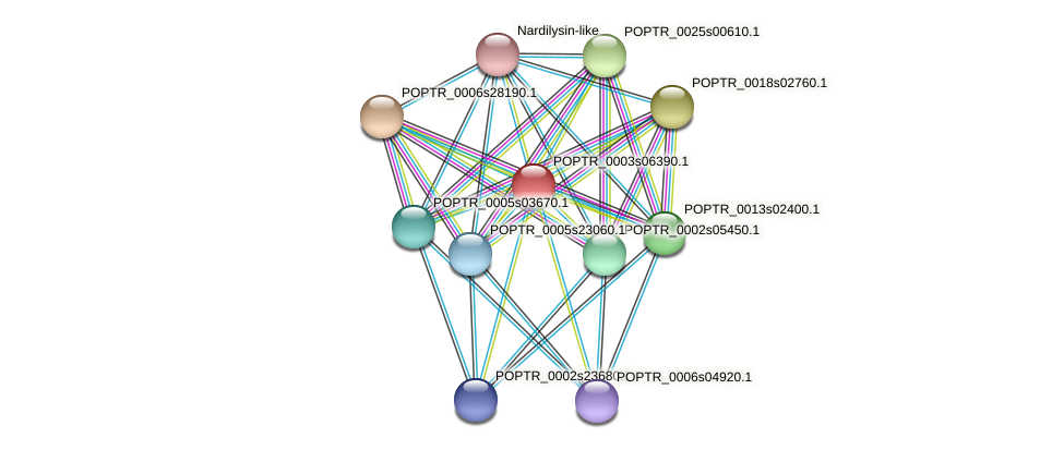 POPTR_0003s06390.1 protein (Populus trichocarpa) - STRING interaction network