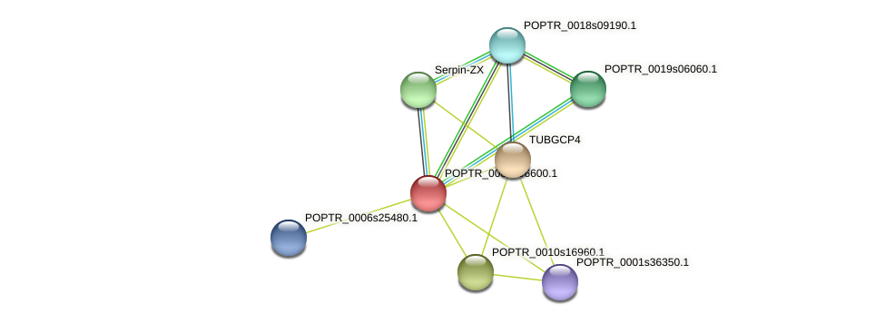 POPTR_0003s06600.1 protein (Populus trichocarpa) - STRING interaction network