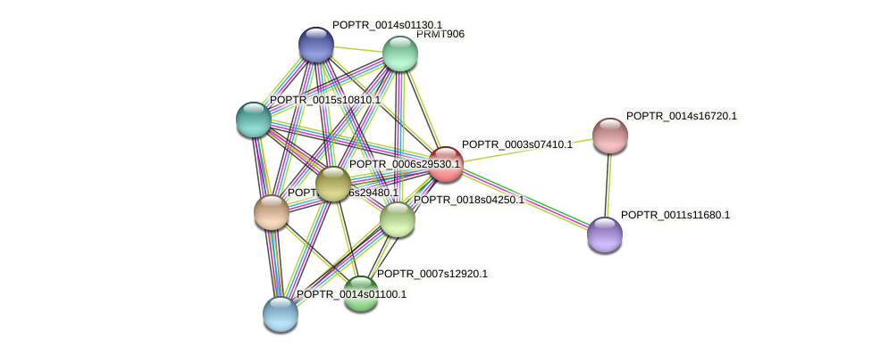 POPTR_0003s07410.1 protein (Populus trichocarpa) - STRING interaction network