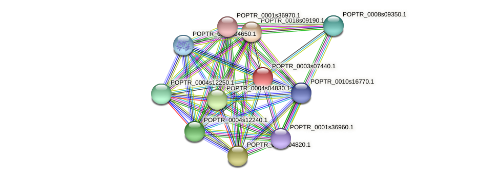 POPTR_0003s07440.1 protein (Populus trichocarpa) - STRING interaction network