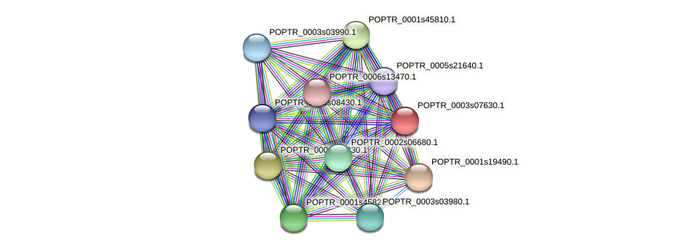 POPTR_0003s07630.1 protein (Populus trichocarpa) - STRING interaction network
