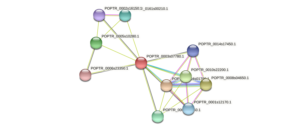 POPTR_0003s07780.1 protein (Populus trichocarpa) - STRING interaction network