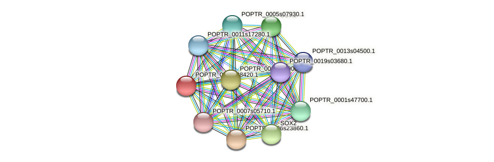 POPTR_0003s08420.1 protein (Populus trichocarpa) - STRING interaction network