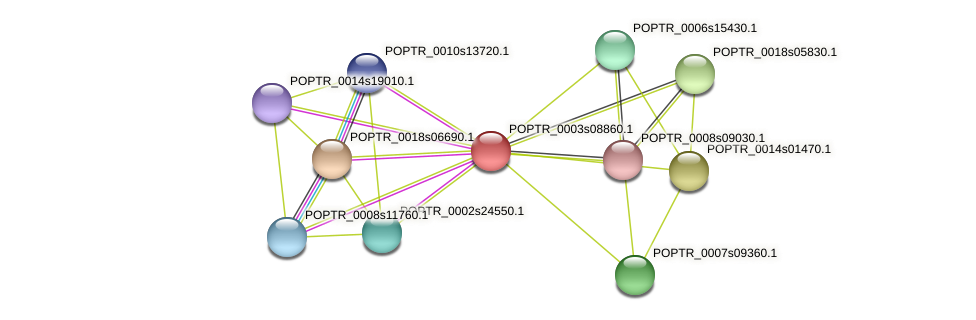 POPTR_0003s08860.1 protein (Populus trichocarpa) - STRING interaction network
