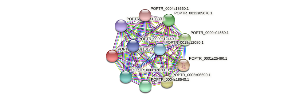 POPTR_0003s10170.1 protein (Populus trichocarpa) - STRING interaction network