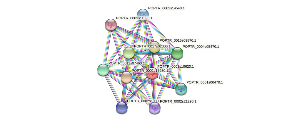 POPTR_0003s10620.1 protein (Populus trichocarpa) - STRING interaction network