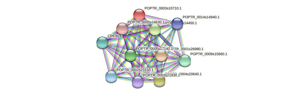 POPTR_0003s10710.1 protein (Populus trichocarpa) - STRING interaction network
