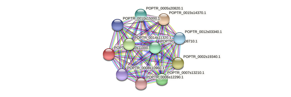 POPTR_0003s11000.1 protein (Populus trichocarpa) - STRING interaction network