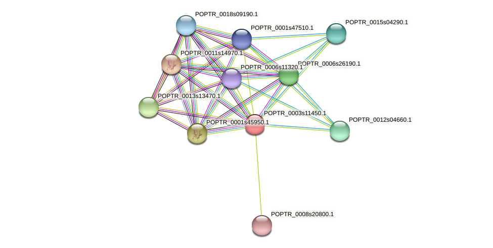 POPTR_0003s11450.1 protein (Populus trichocarpa) - STRING interaction network