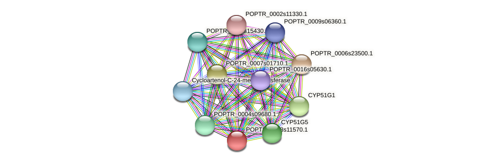 POPTR_0003s11570.1 protein (Populus trichocarpa) - STRING interaction network