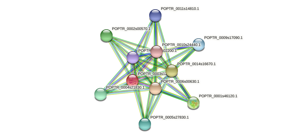 POPTR_0003s12030.1 protein (Populus trichocarpa) - STRING interaction network