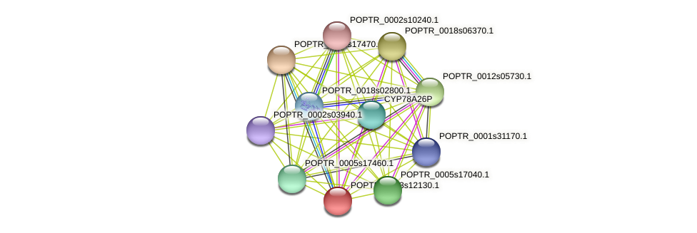 POPTR_0003s12130.1 protein (Populus trichocarpa) - STRING interaction network
