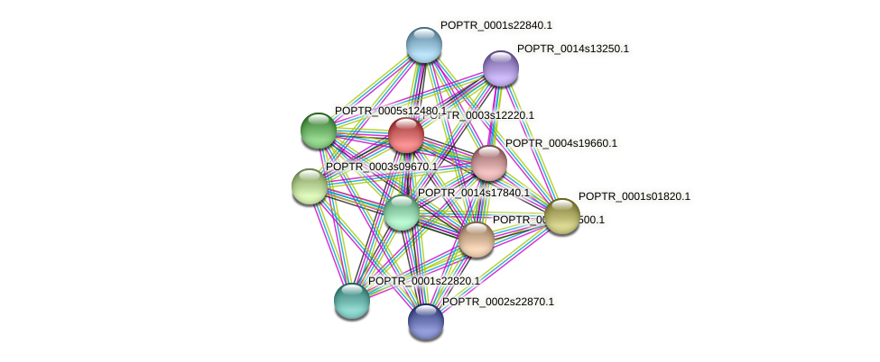 POPTR_0003s12220.1 protein (Populus trichocarpa) - STRING interaction network